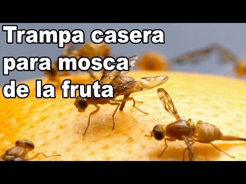Remedio casero contra la mosca de la fruta