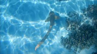 Requin léopard (Zebra Shark) - Les Baleines Rand'eau - Nosy Be