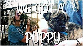 WE GOT A PUPPY