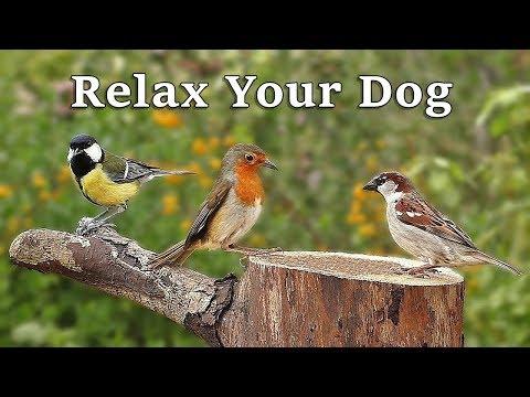 Dog TV : A Video To Calm Your Dog - Garden Birds and Bird Sounds