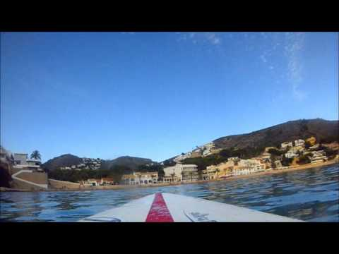 Stand Up paddle + Jely fish +Dead Fish