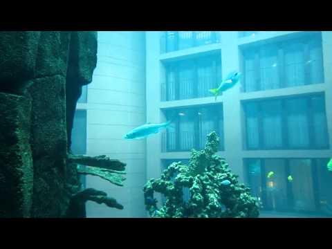 In the lift inside Aqua Dom, the huge aquarium, Sea Life / Radisson Blu Hotel, Berlin, Germany