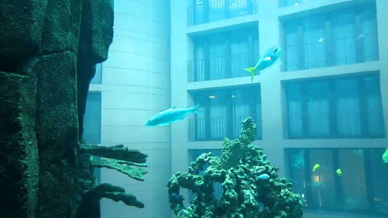 In the lift inside aqua dom the huge aquarium sea life for Fish hotel tank