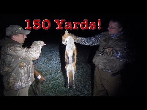PA Red Fox Hunt With Master Predator Hunting Guide