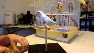 Parakeet Learning Tricks - Full Session
