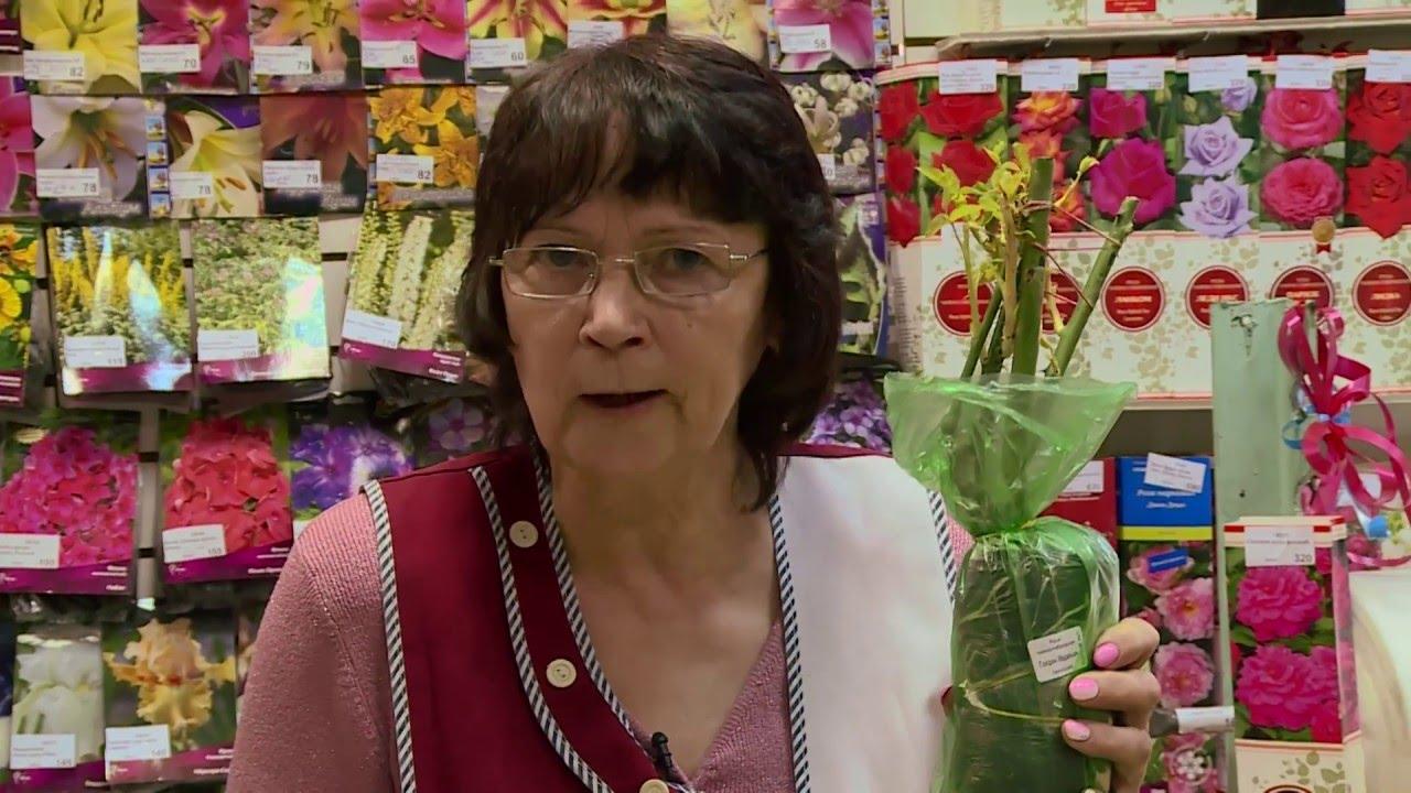 Купить саженцы роз от компании минсксортсемовощ. Реализуем саженцы роз по выгодным ценам оптом и в розницу.