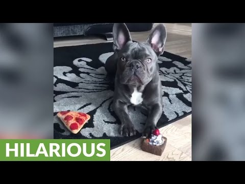 This Amazing Compilation Features The Best Of Funny Dogs!