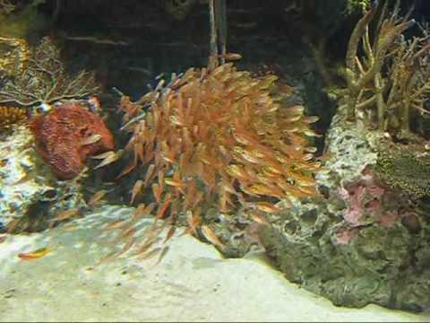Georgia Aquarium Schooling Fish