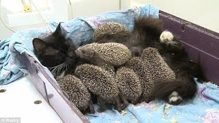 Cat Becomes New Mama to 8 Unlikely Orphaned Babies