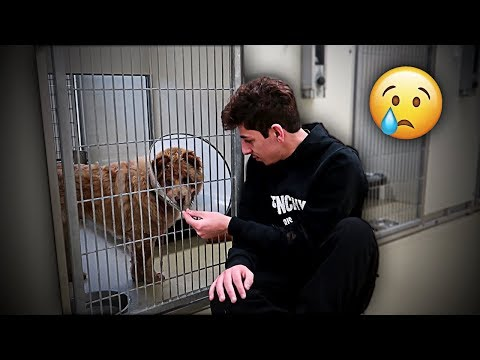 This had to be done... (emotional)