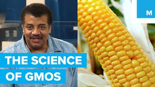 Neil deGrasse Tyson gets to the bottom of GMOs