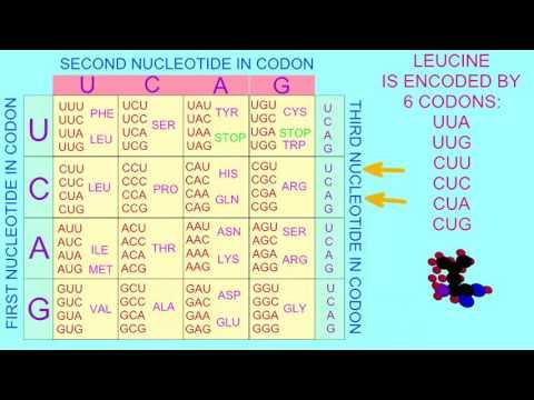 GENETIC CODE IS DEGENERATE
