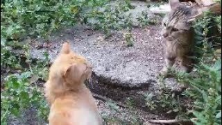 Mom cat attacks male cat to save her kittens