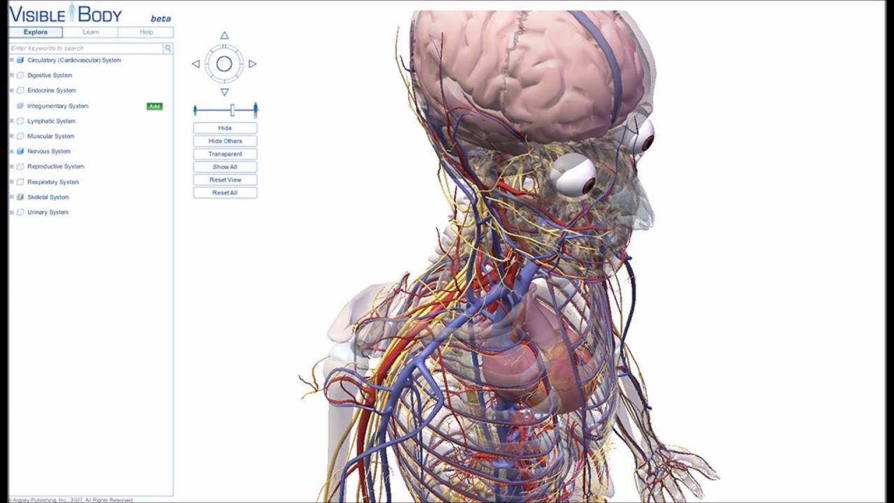 Atlas de anatomía humana 2019: el cuerpo en 3D apk - YouTube