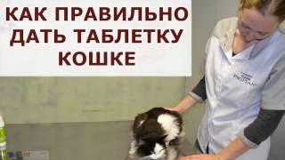 Как дать таблетку кошке (без дополнительных инструментов)