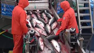 Salmon Farming is Factory Farming