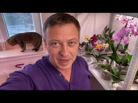 новый СТЕЛЛАЖ с ОРХИДЕЯМИ обзор, свет для орхидей