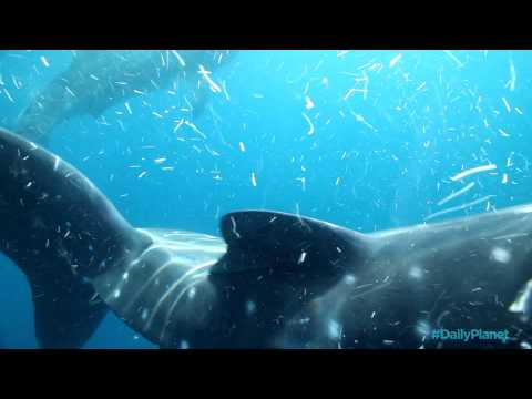 Smacked by a Whale Shark