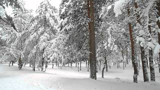 Relaxing nature scenes & chinese instrumental music - In The Forest In Winter Season [Part V]