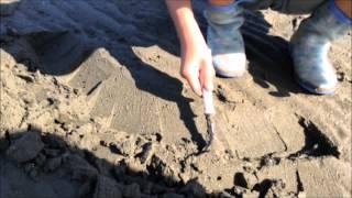 マテ貝取りのコツは、丸い穴はエビやカニなどの穴で、マテ貝の穴は、マ...