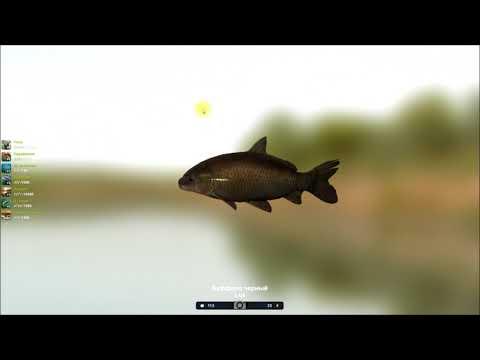Буффало черный, мой опыт бюджетного прохождения квеста в игре Трофейная рыбалка 2