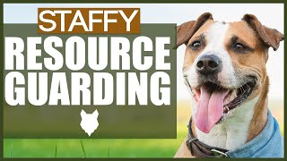 How To Stop Your STAFFORDSHIRE BULL TERRIER GUARDING