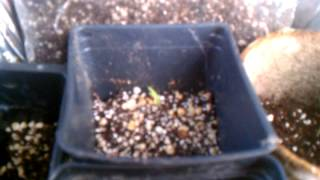 Proof Gardens - (04) - Starting Several Seed Varieties Indoors Part 1 - January 2012
