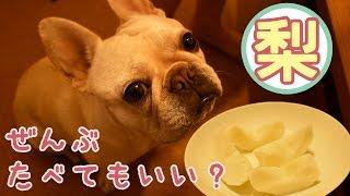 犬は梨を食べてもいいみたいなのでフレンチブルドッグこうめさんにあげ...