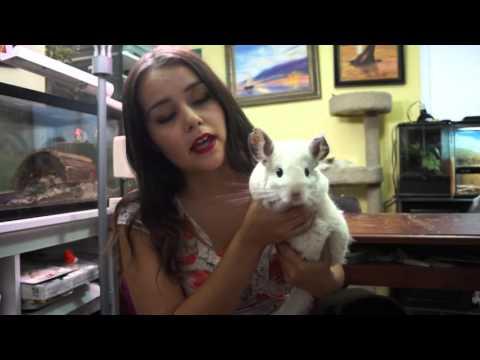 10 Unusual Pets
