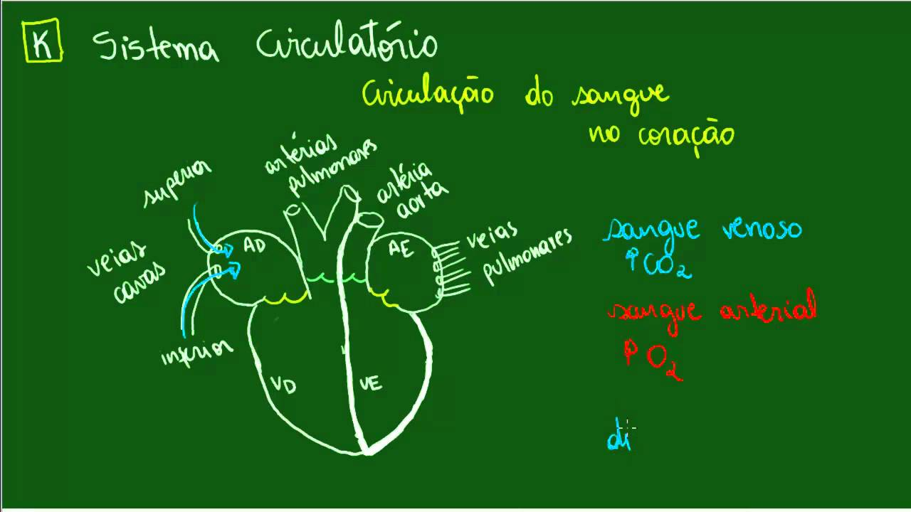 Sistema Circulatório Circulação No Coração Fisiologia Biologia