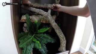Jungle Terrarium Set-up for Arboreal Reptiles