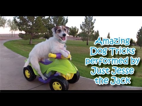 Amazing Dog Tricks performed by Jesse!
