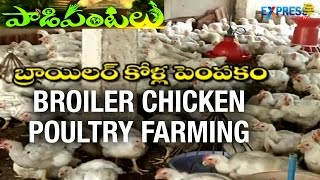 Success story of Broiler Poultry Farmer - Krishna District | Paadi Pantalu