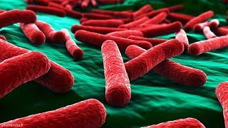 Everything to know about E. coli amid outbreak