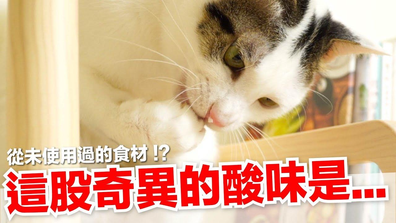 【好味小姐】這是什麼味道!?貓咪愛吃藍莓嗎?|貓副食|貓鮮食廚房EP206