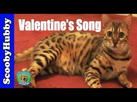 Valentine's Song -- Cat Clips #110