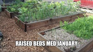 The garden raised beds