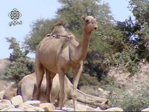 حياة البدو فى الصحراء المغربية-1