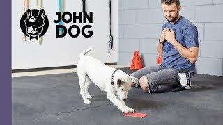 """Sztuczka """"łapka"""" – TRENING – John Dog"""