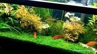 Fertilizing a Planted Aquarium..Greenhouse Aquariums..