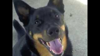 Jango Dog Adoption Video