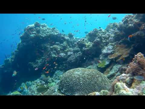 Amazing coral reefs of Papua New Guinea :)