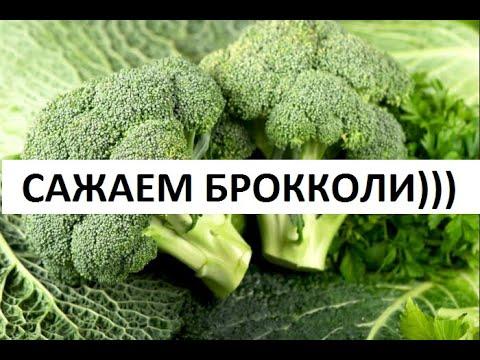 БРОККОЛИ - ВЫРАЩИВАНИЕ, УХОД.
