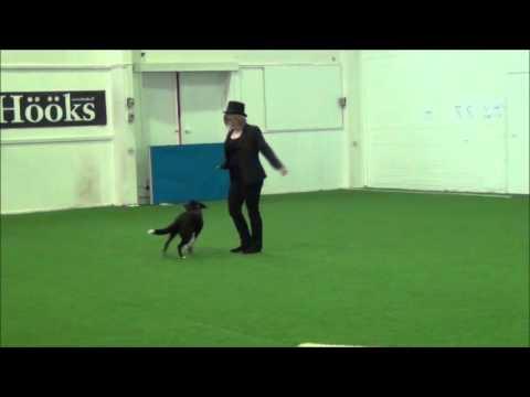 Dog Dancing Beginner Class 6.2.2016