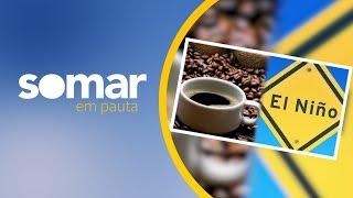 El Niño e possível geada na safra de café no sul de Minas | SOMAR EM PAUTA