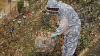 How to Apply Oxalic Acid to Honey Bee Colonies via Sublimation