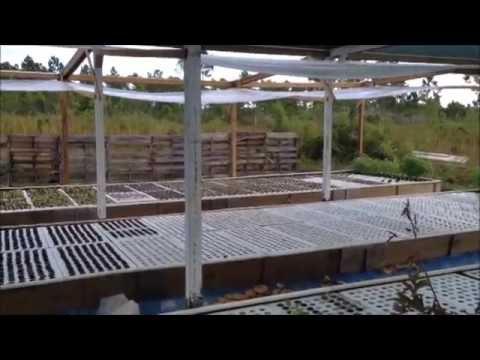 Hall's Organic Farm - C-ARK Project, The CARIBSAVE Partnership