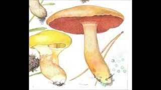 Общая характеристика грибов. Биология 5 класс.