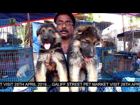 DOG PUPPY SELLER AT GALIFF STREET PET MARKET KOLKATA | 28TH APRIL 2019 | WITH SELLER CONTACT NO.
