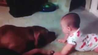 "Pitbull ""attack"" Baby!!"